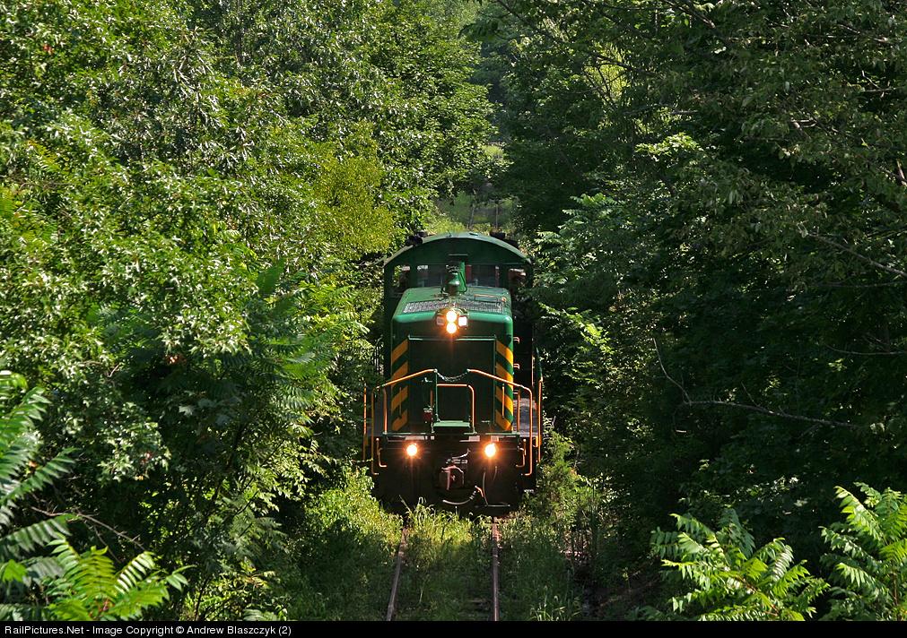 Im Dschungel von New Jersey  (Foto: Andrew Blaszczyk)
